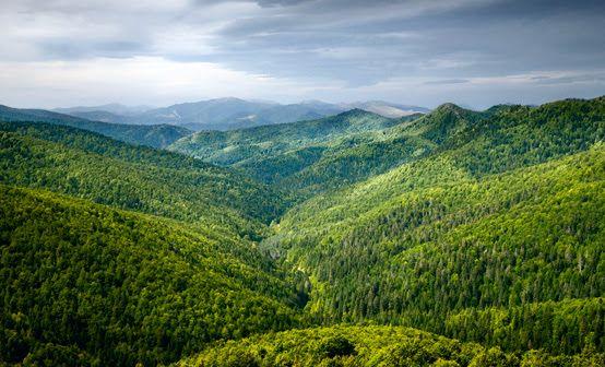 Selva de Irati Keveran